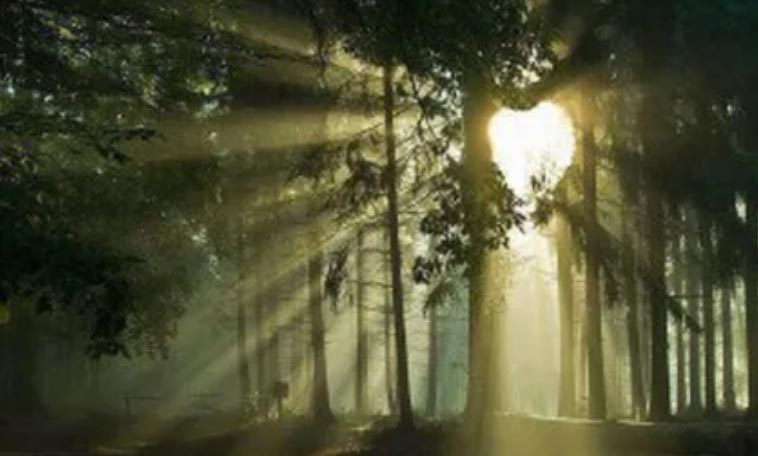 heart-shaped sunlight through the trees represents the path of Chinese medicine