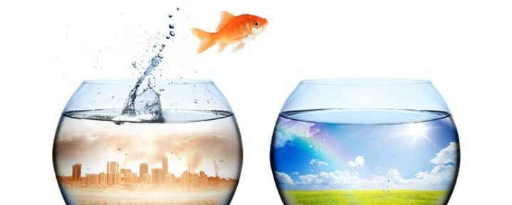 goldfish jumps from polluted to clean fishbowl